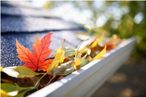 leaves in gutter- roseville
